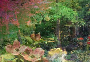 4 Ways to Summer Solstice Magic